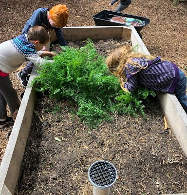 Preshil Vegetable Garden